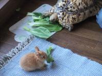ウサギと亀2