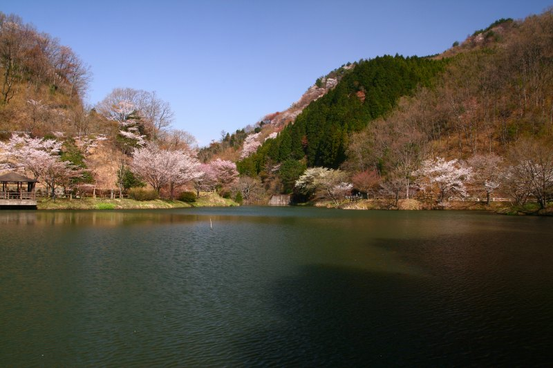 s-野津原桜20100403 037