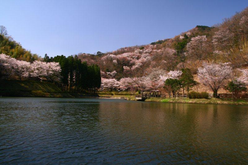 s-野津原桜20100403 042