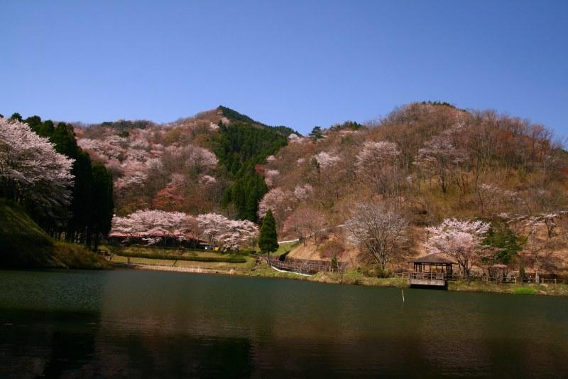 s-野津原桜20100403 060