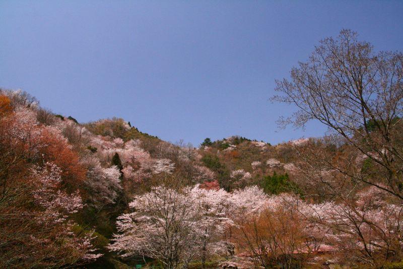 s-野津原桜20100403 121