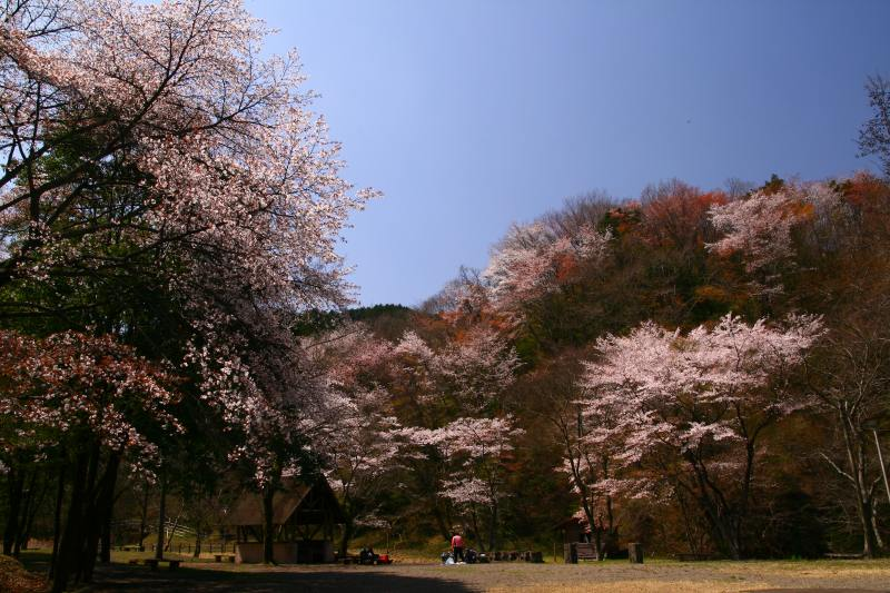 s-野津原桜20100403 133