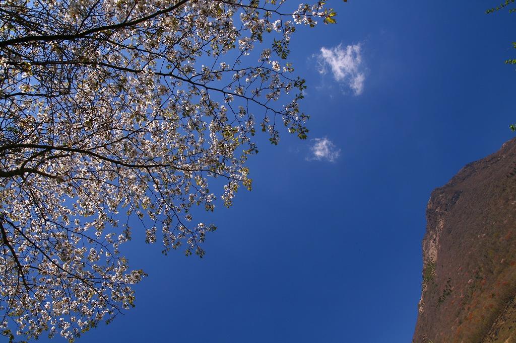 s-由布岳志高湖20100425 161