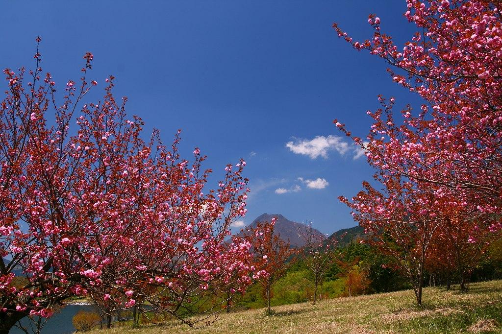 s-志高湖20100425 003