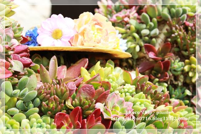 spring(1).jpg