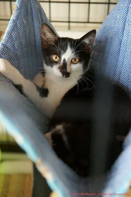 s白黒猫Miysis-DSC02968