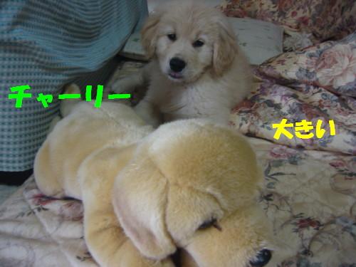 ハリー2009~ 029
