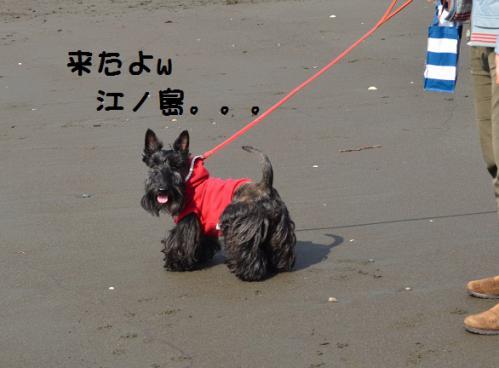 a_20130118214637.jpg