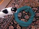 第一発見猫