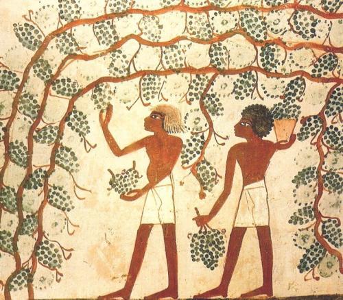埃及の葡萄
