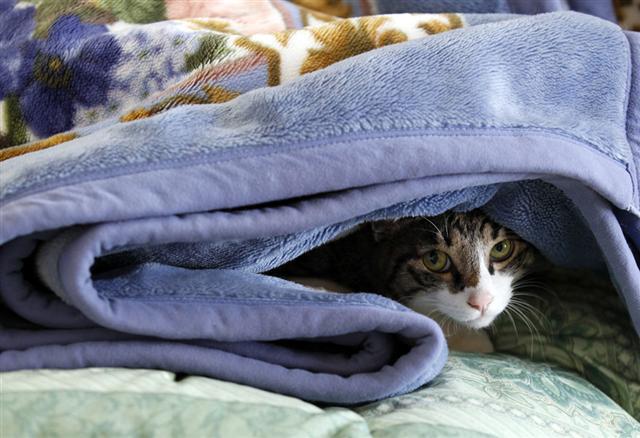 気仙沼の猫ちゃん