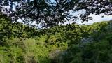 20130503原生の森03