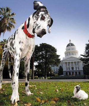7111001_Dogs_01_R.jpg