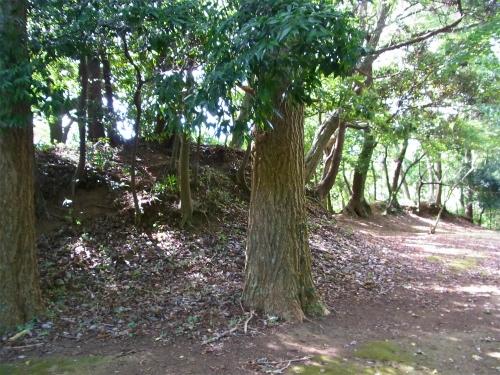 臼井城土塁