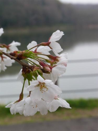 八丁湖 (3)