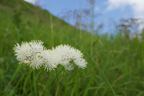 11花 (1200x800)