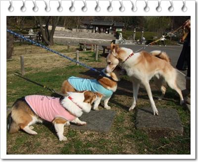 県立 三ッ池公園【22.3.17】NO10