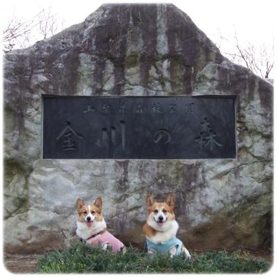 山梨県森林公園 金川の森【22.3.18】NO1