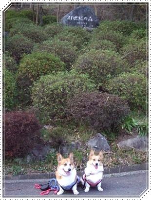 県立 21世紀の森【22.3.22】NO1