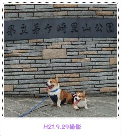 県立茅ヶ崎里山公園&引地川親水公園【22.2.7】NO1