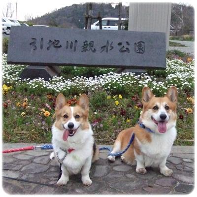 大庭城址&引地川親水公園【22.3.23】 NO4