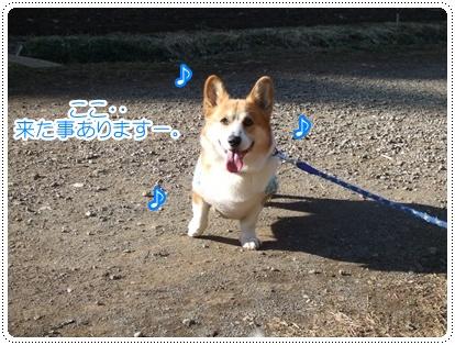 県立茅ヶ崎里山公園&引地川親水公園【22.2.7】NO2