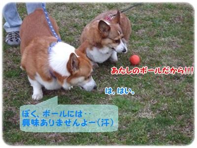 大庭城址&引地川親水公園【22.3.23】NO13