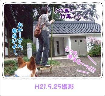 県立茅ヶ崎里山公園&引地川親水公園【22.2.7】NO4
