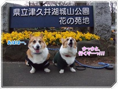 県立 津久井湖城山公園【22.3.29】 NO1