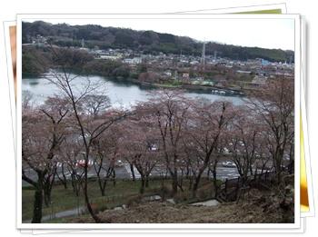 県立 津久井湖城山公園【22.3.29】 NO4