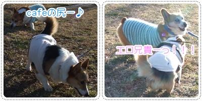 県立茅ヶ崎里山公園&引地川親水公園【22.2.7】NO12