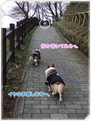 県立 津久井湖城山公園【22.3.29】 NO5