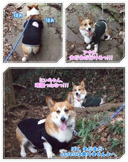 県立 津久井湖城山公園【22.3.29】 NO7