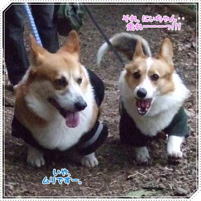 県立 津久井湖城山公園【22.3.29】 NO8