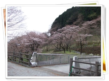 県立 津久井湖城山公園【22.3.29】 NO14