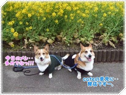 県立 津久井湖城山公園【22.3.29】 NO15