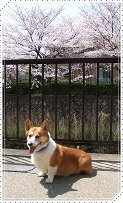 moca、あれこれ検査【22.4.8】 NO1