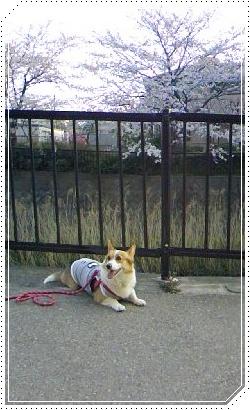 moca、あれこれ検査【22.4.8】 NO4