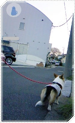 moca、あれこれ検査【22.4.8】 NO5