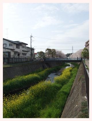 近所の桜‥満開♪【22.4.10】 NO2
