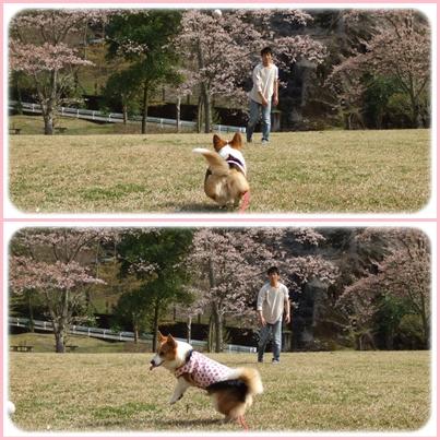 お花見は、恒例のダム広場でヽ(*⌒▽⌒*)ノ【22.4.11】 NO3