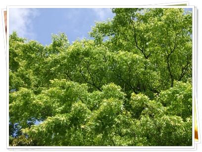 新緑を見に‥箱根へ(σ≧∀≦)σ【22.5.21】 NO6
