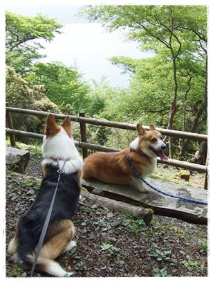 新緑を見に‥箱根へ(σ≧∀≦)σ【22.5.21】 NO11