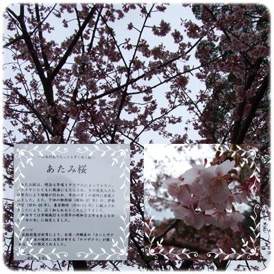 熱海梅園【22.2.17】NO4