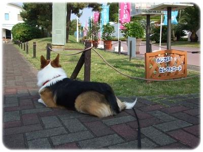 八景島・あじさい祭【22.6.11】 NO12
