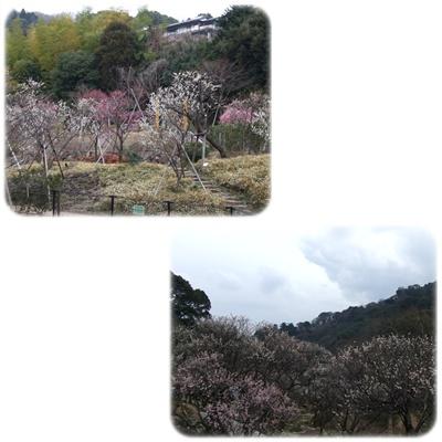 熱海梅園【22.2.17】NO6