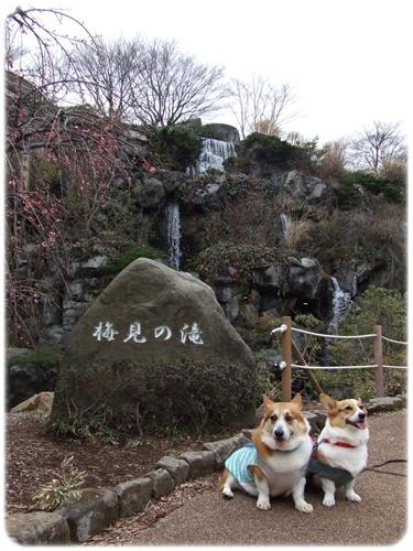 熱海梅園【22.2.17】NO7