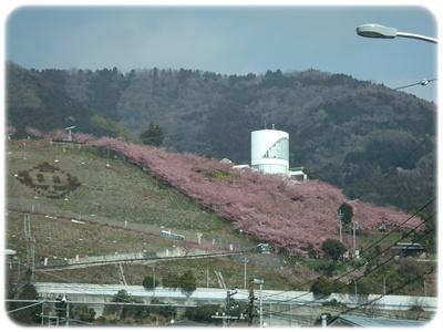 まつだ桜まつり&ふれあいどうぶつ村【22.2.22】NO1