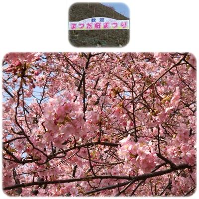 まつだ桜まつり&ふれあいどうぶつ村【22.2.22】NO3