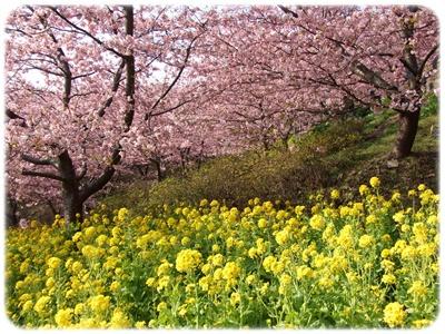 まつだ桜まつり&ふれあいどうぶつ村【22.2.22】NO4
